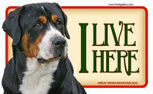 GREAT SWISS MOUNTAIN DOG – Tabliczka 18x11cm