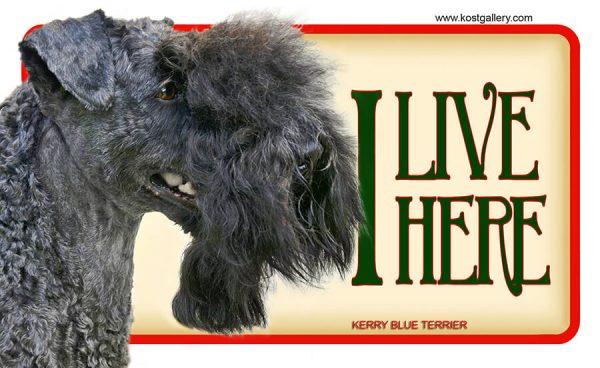 KERRY BLUE TERRIER 01 – Tabliczka 18x11cm