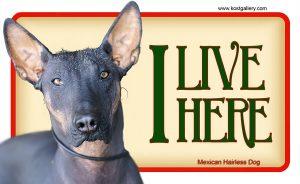 MEXICAN HAIRLESS DOG – Tabliczka 18x11cm