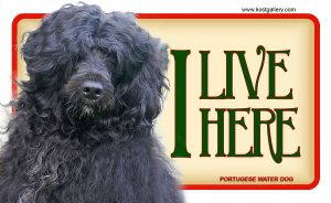 PORTUGUESE WATER DOG – Tabliczka 18x11cm