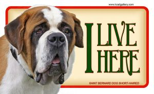 SAINT BERNARD DOG 02 – Tabliczka 18x11cm
