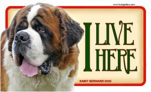 SAINT BERNARD DOG – Tabliczka 18x11cm