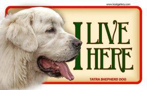 TATRA SHEPHERD DOG – Tabliczka 18x11cm