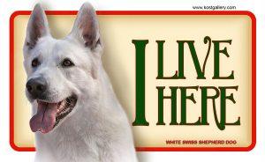 WHITE SWISS SHEPHERD DOG 01 – Tabliczka 18x11cm